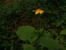 Fleur 3 image libre de droits