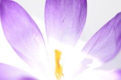 Fleur abstraite Photos libres de droits
