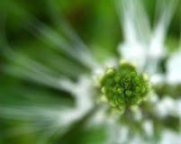 Fleur abstraite Image libre de droits