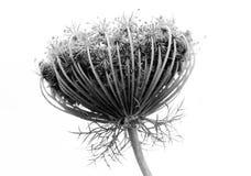 Fleur abstraite noire et blanche Photographie stock