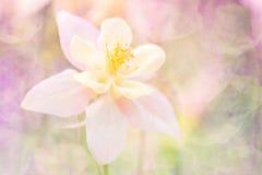 Fleur abstraite sensible avec une texture Une fleur dans une tonalité rose chaude Orientation sélectrice molle Fond élégant Photos libres de droits