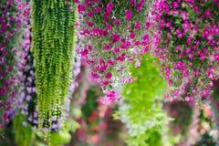 Fleur accrochante Photos libres de droits