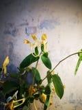 Fleur anonyme avec la photo immobile sp?ciale photographie stock libre de droits