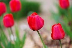 Fleur (anthos, flos) Photo libre de droits