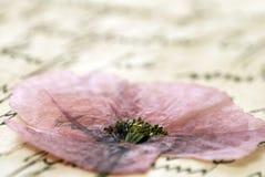 Fleur appuyée sur la lettre images stock