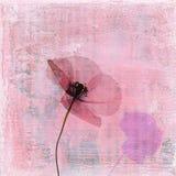 Fleur appuyée de pavot Image libre de droits