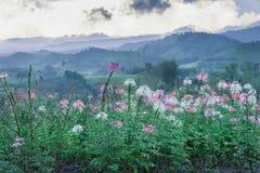 Fleur après des montagnes de fond de pluie Photographie stock libre de droits
