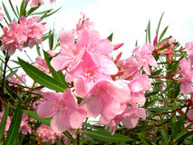 Fleur après pluie image libre de droits