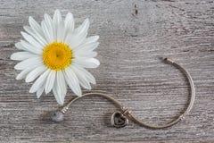 Fleur argentée de bracelet et de camomille Photographie stock libre de droits