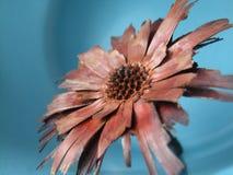 Fleur artificielle Photos stock
