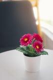 Fleur artificielle de décoration colorée dans le vase à la maison Image libre de droits