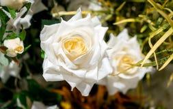 Fleur artificielle de rose de blanc dans la fin de pot sur le backgrou brouillé Photo stock