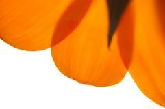 Fleur artistique Photo stock