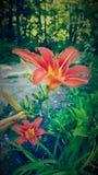 fleur assez Image libre de droits