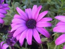 fleur assez Photos libres de droits