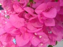 fleur assez Photo stock