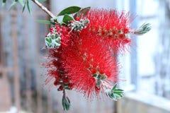 fleur assez Photographie stock libre de droits