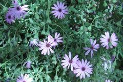 fleur assez Image stock