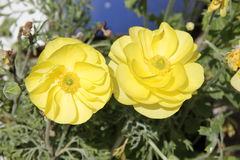fleur assez Photos stock