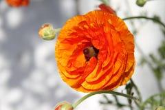 fleur assez Photo libre de droits