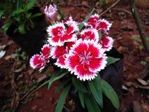 Fleur attrayante Image libre de droits