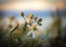 Fleur au coucher du soleil Photo stock