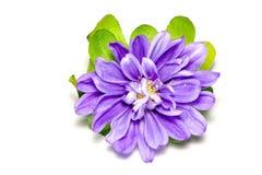Fleur au-dessus de blanc Image stock