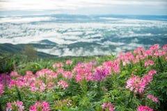 Fleur au divers arrière-plan de ressort de couleur photographie stock