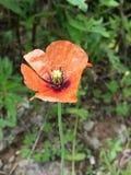 Fleur au Pendjab images stock
