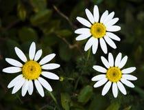 Fleur au printemps image libre de droits