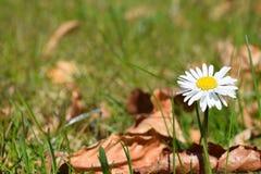 Fleur au printemps Image stock