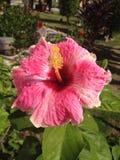 Fleur au ratburi Photo libre de droits
