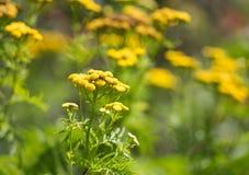 Fleur au ressort Photographie stock