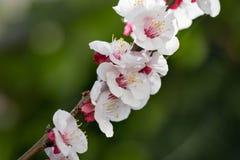 Fleur au ressort images stock
