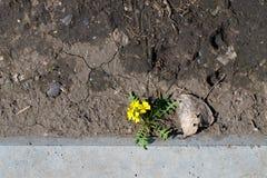 Fleur au sol Image stock