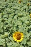 Fleur au soleil Photo stock