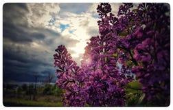 Fleur au soleil Images stock