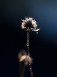 Fleur au soleil Photos stock
