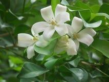Fleur avec Photo libre de droits