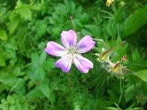 Fleur avec cinq pétales Image libre de droits