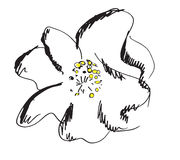 Fleur avec de grands pétales Images libres de droits