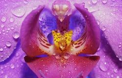 Fleur avec des baisses Photographie stock