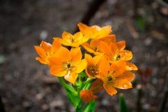 Fleur avec des baisses de l'eau photographie stock