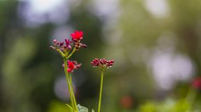 Fleur avec des baisses de pluie sur un fond brouillé images libres de droits