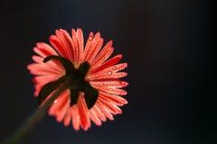 Fleur avec des baisses de rosée images stock