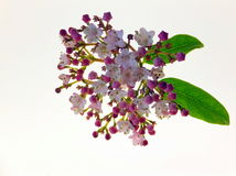 Fleur avec des feuilles Photographie stock