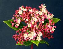 Fleur avec des feuilles Image stock