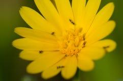 Fleur avec des insectes Photos libres de droits