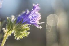 Fleur avec des réflexions rondes du soleil là-dessus Photos libres de droits