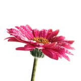 Fleur avec des waterdrops Photo stock